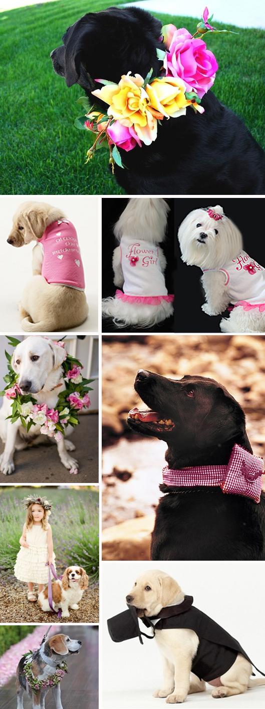 Dogs in Weddings 3