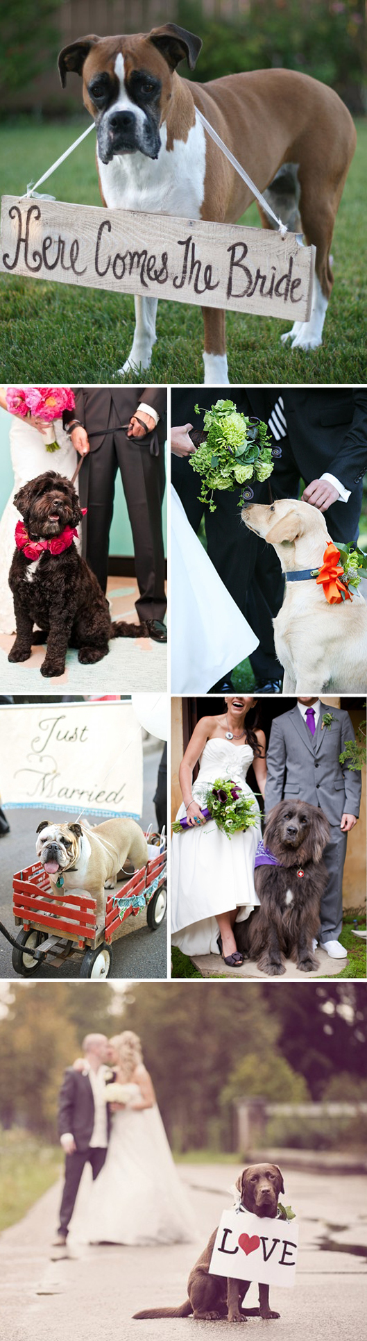 Dogs in Weddings 2