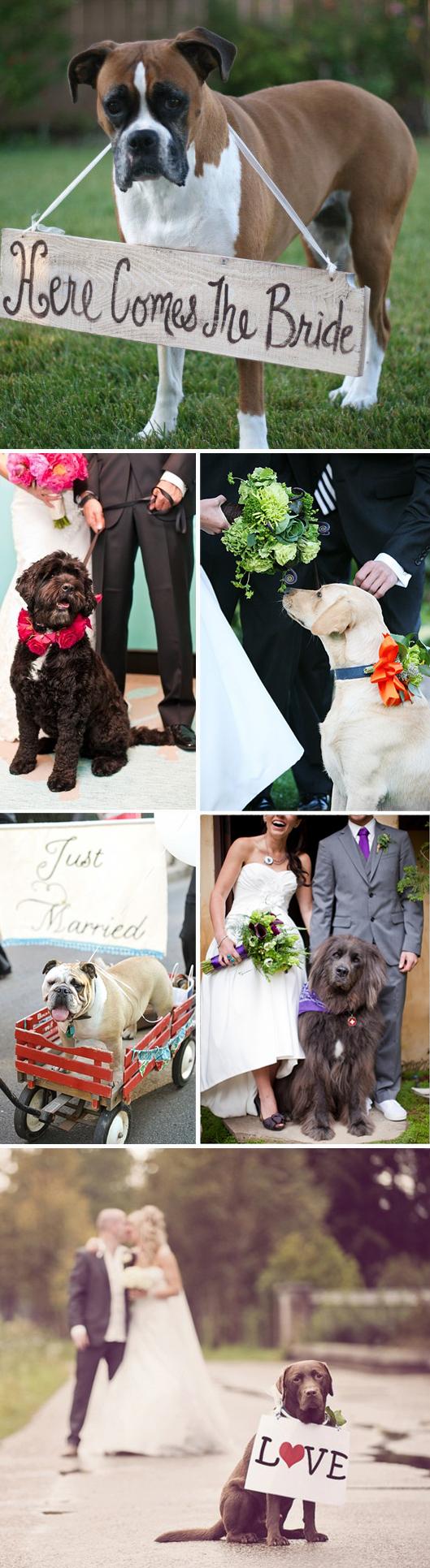 Dogs in Weddings 2