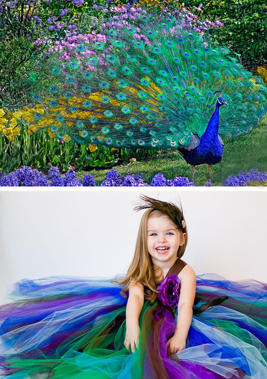 Peacock and Flower Girl