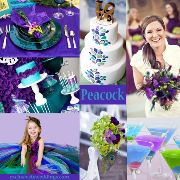 Peacock-Colors-Wedding-1