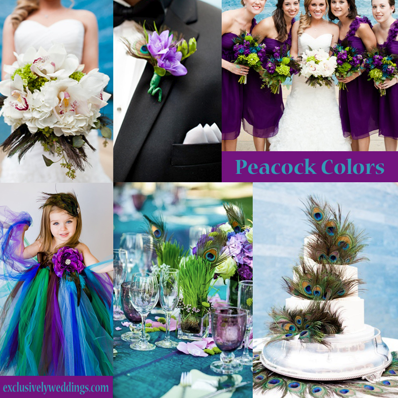 Your Wedding Colors Peacock
