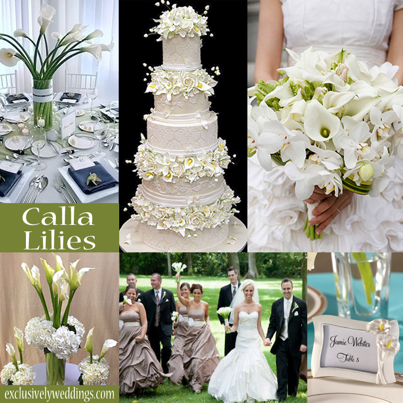 Your wedding theme calla lilies sunflowers or daisies for All white wedding theme pictures